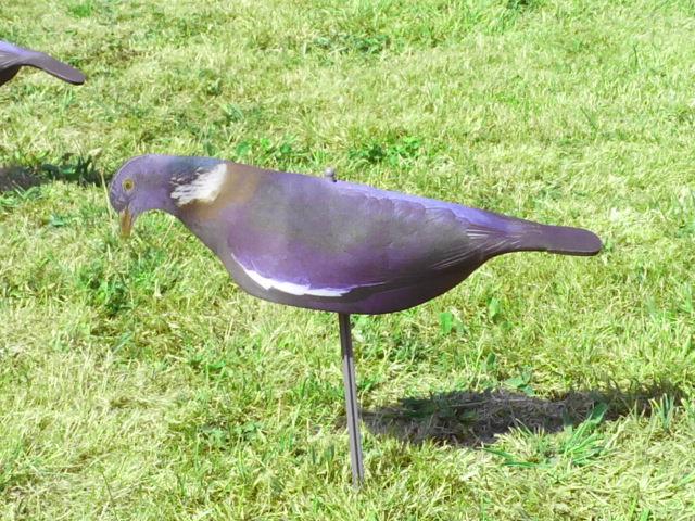 comment chasser le pigeon avec des formes. Black Bedroom Furniture Sets. Home Design Ideas